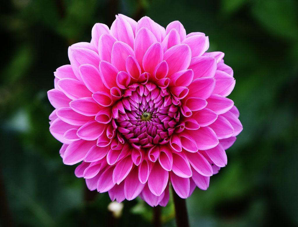 Fleur témoignages Aurélie Magnétique