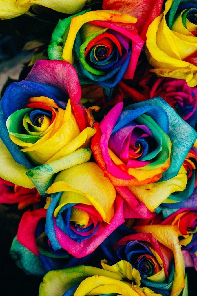Roses guidance énergétique accueil Aurélie Magnétique